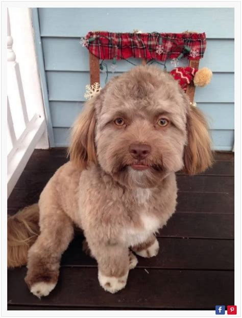 dogs that look like puppies as adults the that looks like a human photo radiant living