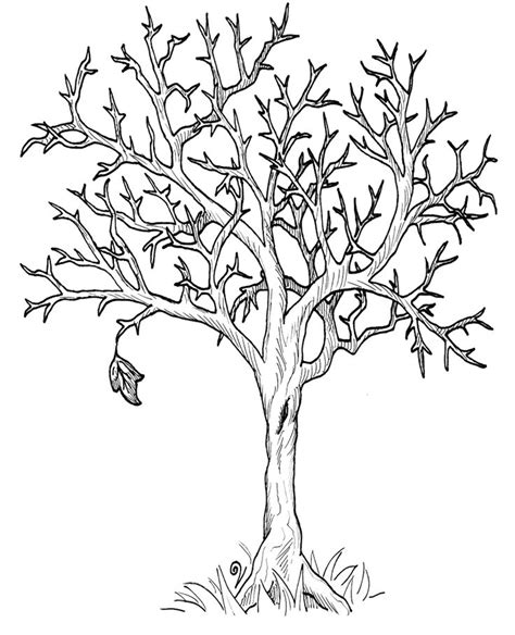 elm tree coloring page 405 best templates and designs trees images on pinterest