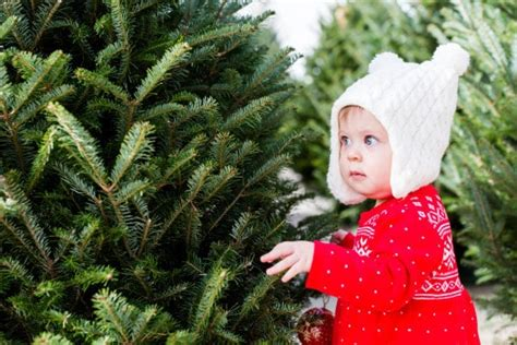 where to buy a real christmas tree in belfast where to buy real trees around edmonton