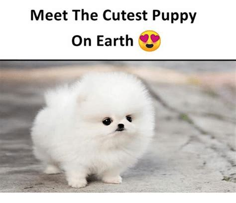 cutest puppies on earth 25 best memes about cutest puppy cutest puppy memes