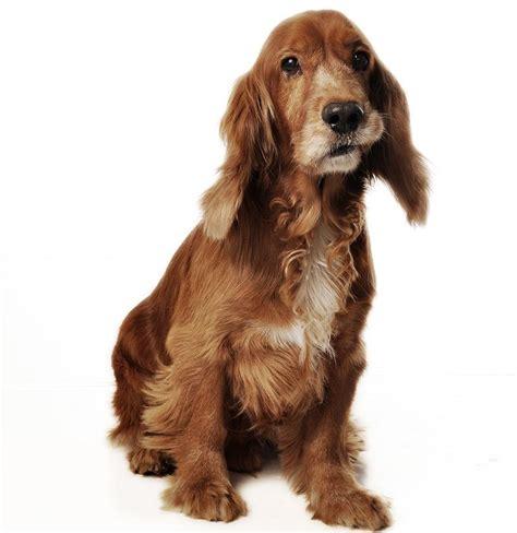 imagenes abstractas de un perro c 243 mo ba 241 ar a mi perro sin agua 6 pasos uncomo