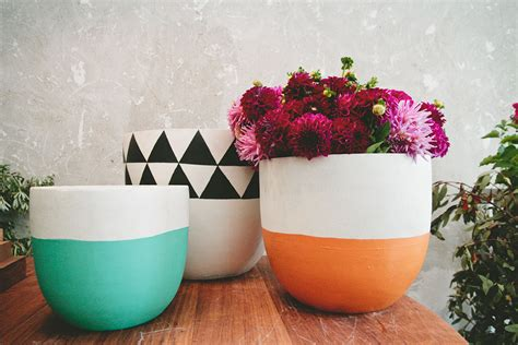 in door plant put in pot vide pop scott pots anouska loves