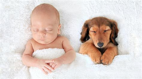 babies and puppies cuteness puppies and babies so adorable they will make you cry
