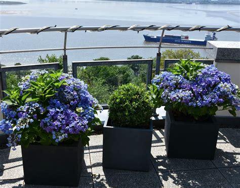 Englischer Garten Pflanzen by Get The Garden Pflanzmich De