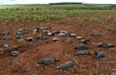 Furadan Plus aves nativas s 227 o mortas por agrot 243 xicos na ponte alta no