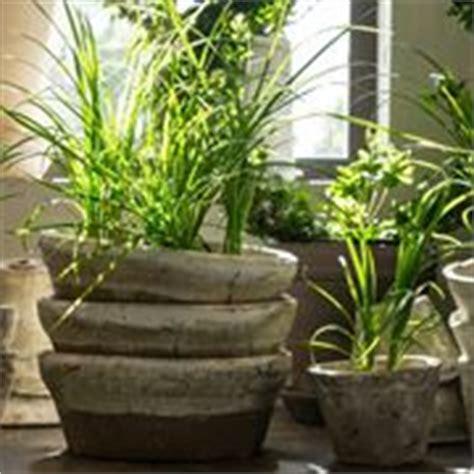 poca acqua dal rubinetto piante da appartamento poca luce