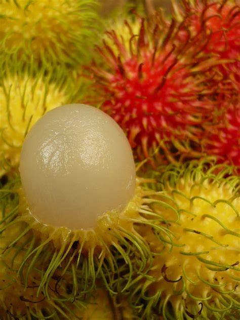 lychee fruit inside 780 best some malaysian fruits images on pinterest