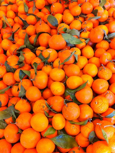 new year oranges supplier new year mandarin 28 images oranges delivery new year
