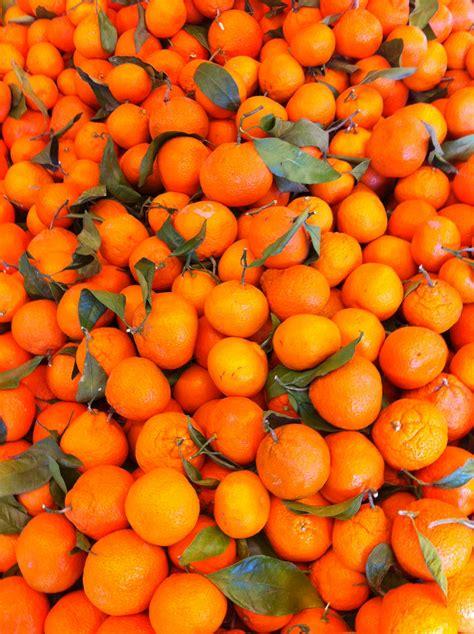 new year throwing oranges mandarin new years 28 images mandarin cake shop cny