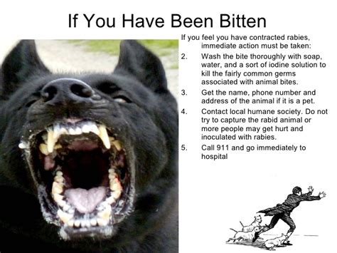 how do dogs get rabies rabies images