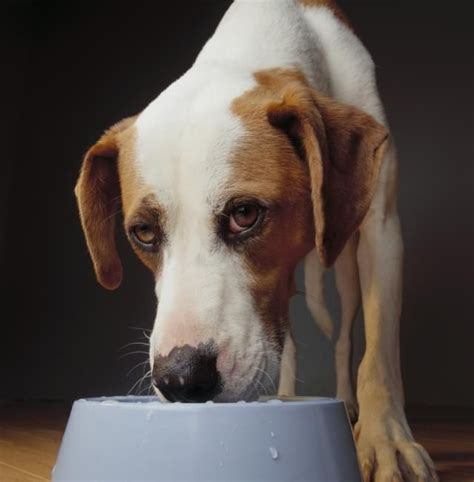 signs of kidney failure in dogs 10 best ideas about signs of kidney failure on signs of thyroid problems