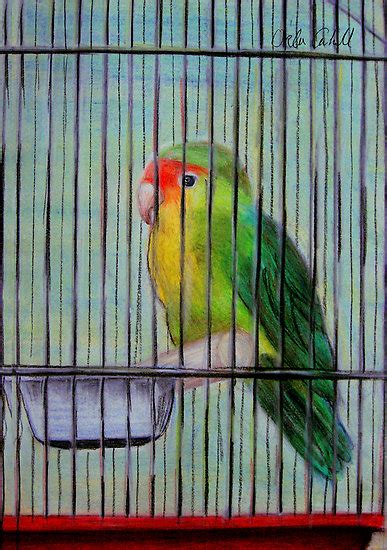 Bird In A Cage the human mind can never be trapped or caged 171 www