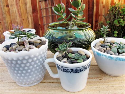 9 low maintenance plants for the office succulents in
