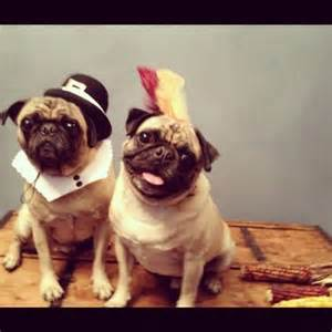 Thanksgiving Pug Pictures Pilgrim And Indian Pugs Thanksgiving Pugs And Some