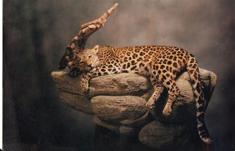 Leopard Bird leopard bird related keywords suggestions leopard bird