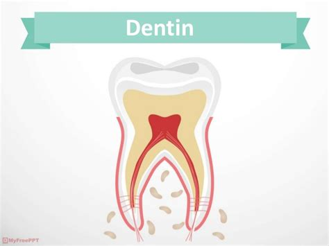 Reem Hussam Dentin Free Animated Dental Powerpoint Templates