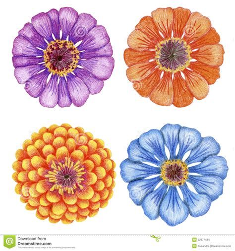 fiori disegnati a matita fiori disegnati a mano di zinnia immagini stock immagine