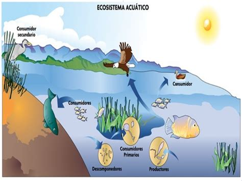 cadenas alimentarias y sus elementos ecosistemas marinos