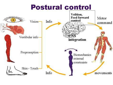 vestibulo meaning in english postural causes symptoms treatment postural