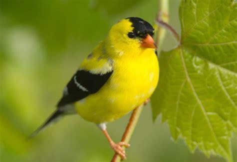 backyard birding magazine backyard birding basics greenability magazine