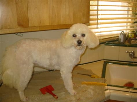 learn to groom dogs learn to groom your dogs yourself thriftyfun