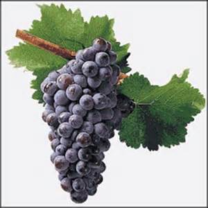imagenes de uvas tintas garnacha aprende a catar vino