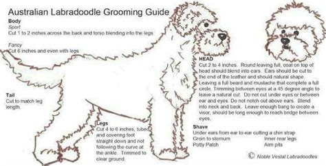 grooming guide 5 perfectly groomed celebrities 78 images about doodles doodles and more doodles on