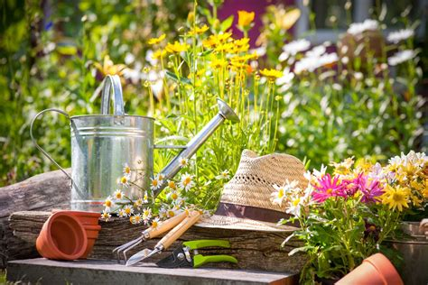 Gardening Year Albertsons 187 5 Easy Steps To Start A Vegetable Garden