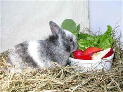 alimentazione dei conigli l alimentazione aae onlus