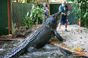 worlds largest crocodile