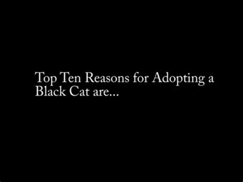 Top 10 Reasons To Adopt A by Top Ten Reasons To Adopt A Black Cat From Hshv