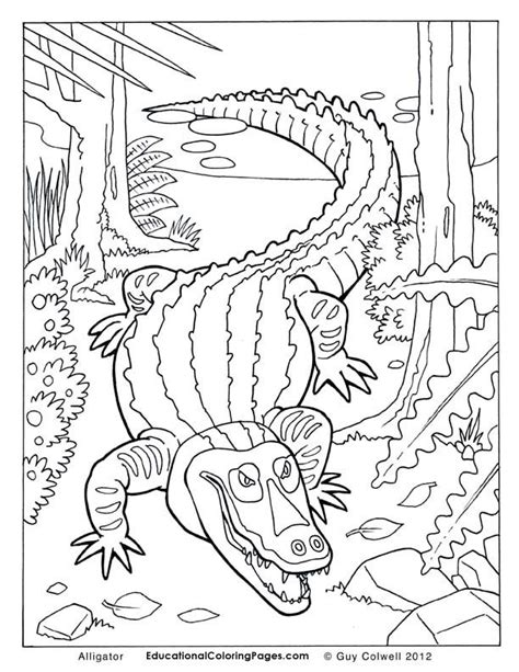 free coloring page alligator alligator color page az coloring pages