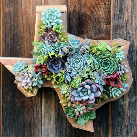hanging texas succulent garden succulent hanging planter