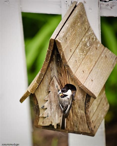 chickadee house plans 25 best ideas about bird house plans on pinterest building bird houses diy