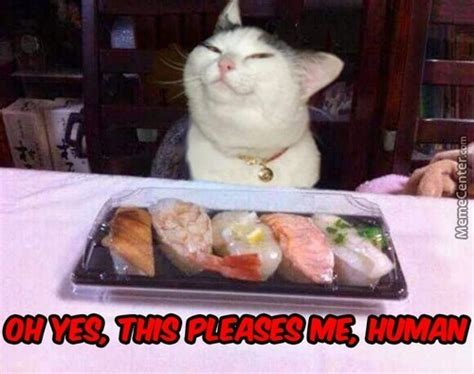 Sushi Meme - sushi memes best collection of funny sushi pictures