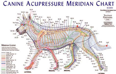 acupuncture for dogs acupuncture for dogs special report