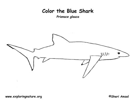 shark anatomy coloring page shark blue coloring page