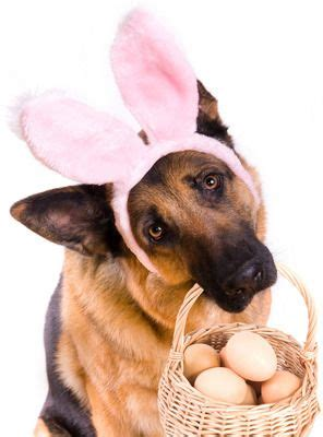 bunny ears for dogs 25 easter pictures to make you smile cas easter eggs and pictures