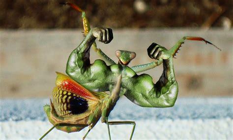 imagenes animales raros reales animales extra 241 os encontrados cosas raras del mundo