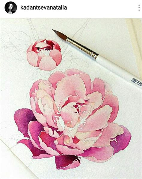 watercolor tattoo peony 177 best images about watercolor peonies on