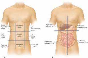 The four regions of the abdomen which are referred to as quadrants