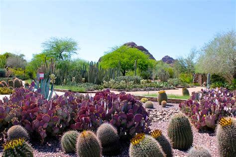 desert botanic garden the desert in bloom at the desert botanical garden in