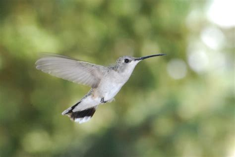 recipe for hummingbird food backyard food growing