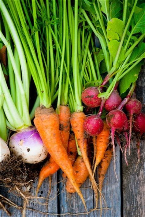 healthiest root vegetables cathe friedrich discover the new health benefits of root