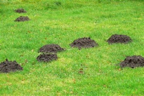 Ameisen Im Garten Vernichten by Ameisen Im Garten Vertreiben Statt Vernichten Husmann Garten Und Landschaftsbau Gmbh