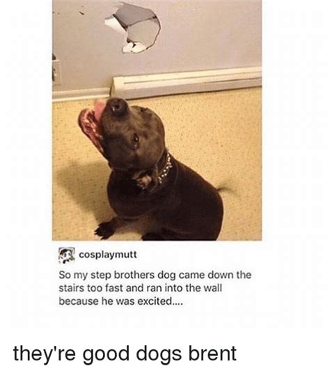 they re dogs brent 25 best memes about step brothers step brothers memes