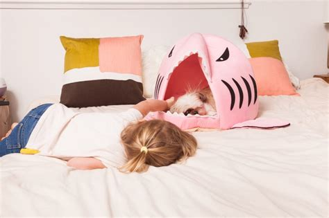 shark pillow that eats you how to clean your dog s favorite spots to prevent parvovirus