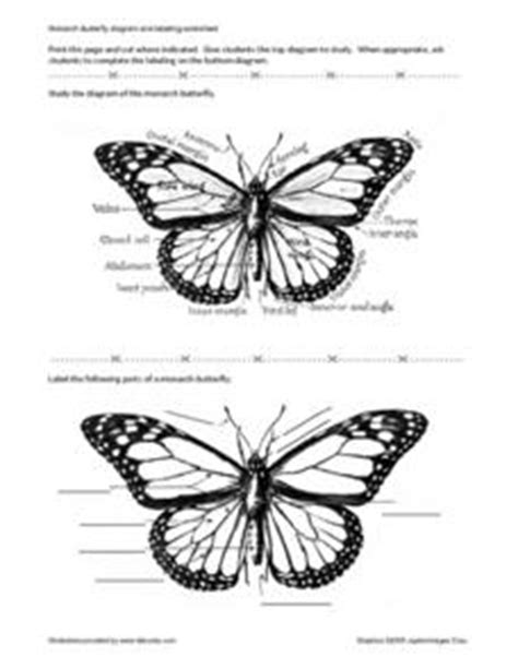 monarch butterfly diagram and labeling worksheet 4th 5th