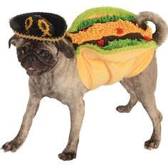 pug in taco costume 1000 images about tiny dogs in and other sh t on pet