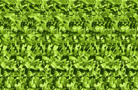 imagenes ocultas en 3d dificiles tridiman 237 as o im 225 genes en 3d ocultas pcexpertos
